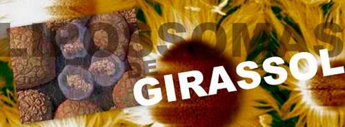 LIPOSSOMA DE GIRASSOL - ELIMINAR GORDURAS LOCALIZADAS