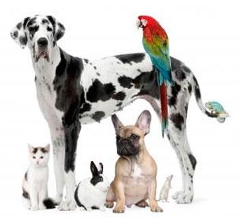 COMO ESCOLHER UM ANIMAL DE ESTIMAÇÃO?