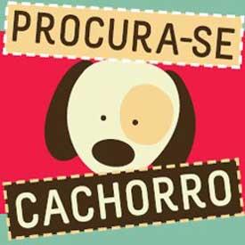 PROCURA-SE CACHORRO - SITE PARA CÃES PERDIDOS - WWW.PROCURASECACHORRO.COM.BR