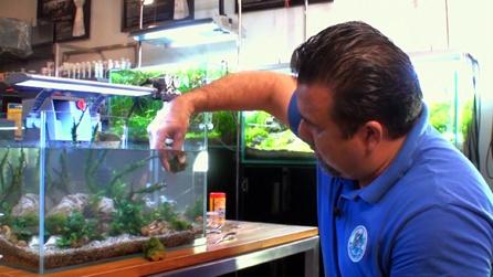 Como fazer a manutencao de um aquario